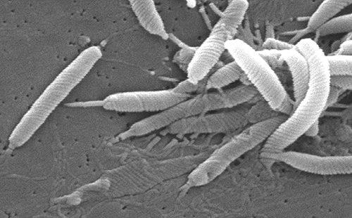 Черно-белый снимок микроба